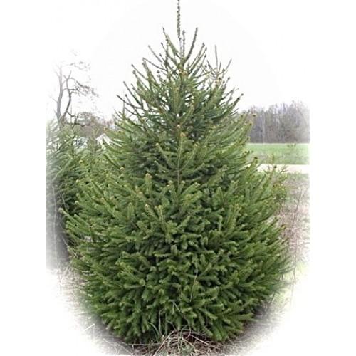 christmas tree farm shop